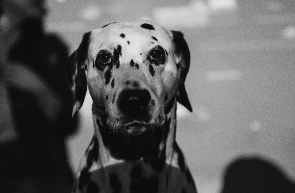 В Астрахани собака набросилась на мужчину