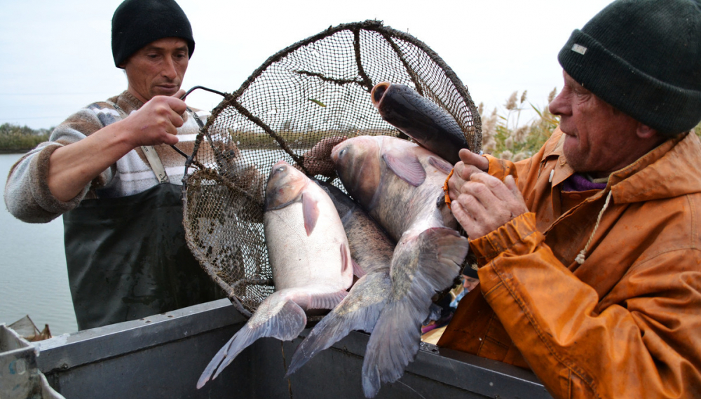 Рыбы в Астраханской области теперь можно поймать в два раза больше