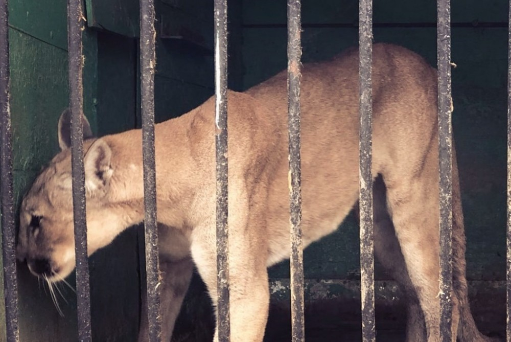 Прокуратура запретила проверять передвижной зоопарк с полудохлыми животными
