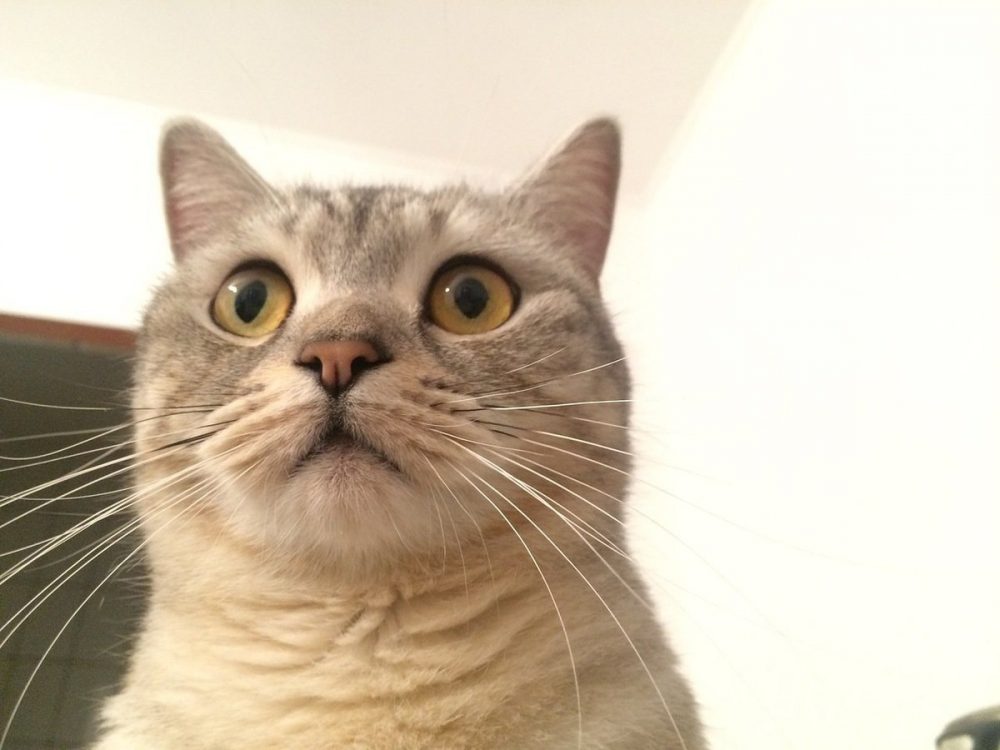 В Астрахани кошка - преступница попала на камеры видеонаблюдения