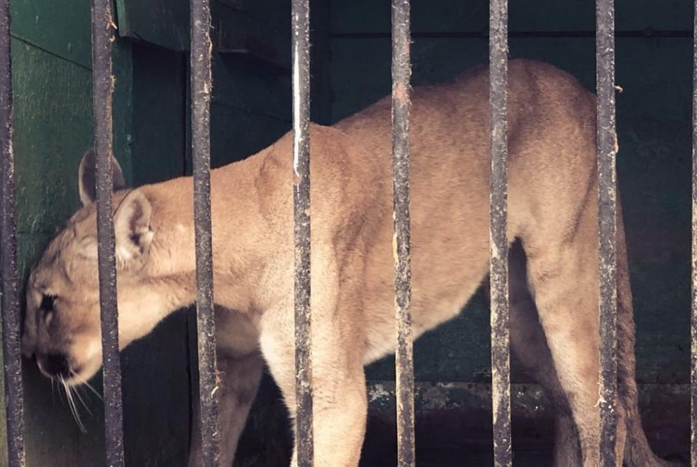 Астраханцы собирают подписи против передвижных зоопарков