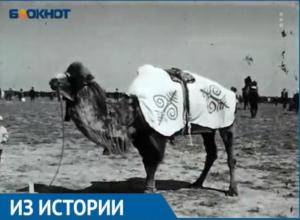 В Астраханской области скачки на верблюдах закончились беспорядками