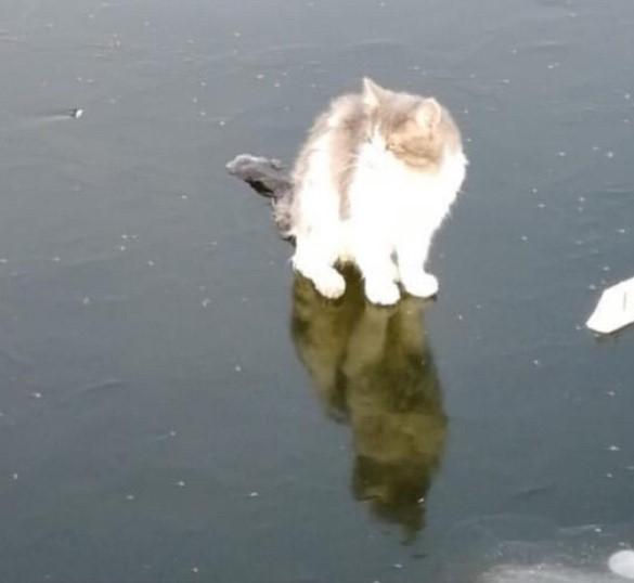 Астраханцы спасли примерзшего ко льду котика