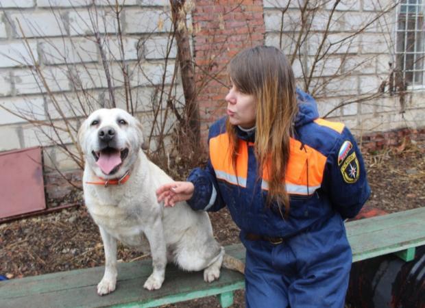 Собачья работа: как служат четвероногие спасатели в Астрахани