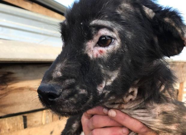 В астраханском приюте для бездомных животных эпидемия