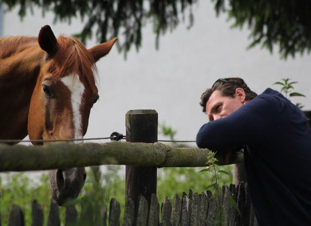 Соцсети: в Астрахани мужчина пытался заняться сексом с конем