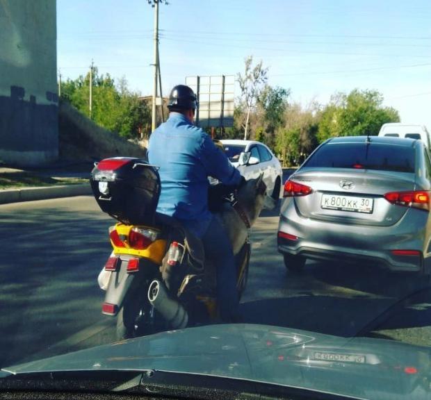 В Астрахани на мотоцикле разъезжает пёс