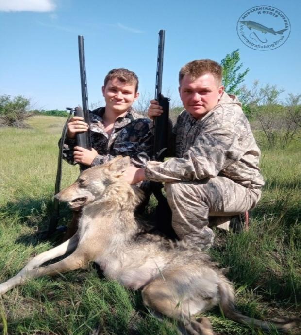 Астраханские охотники выследили и убили опасного волка