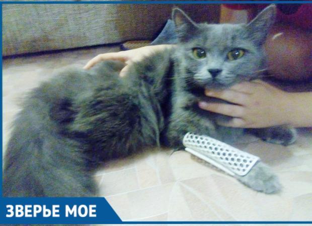 Астраханец изготавливает лангетки для котиков