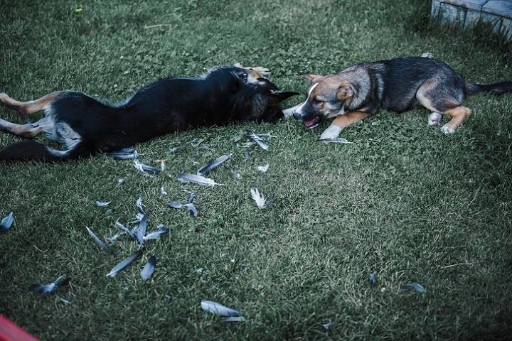 В Астрахани бродячая собака укусила ученика прямо в классе
