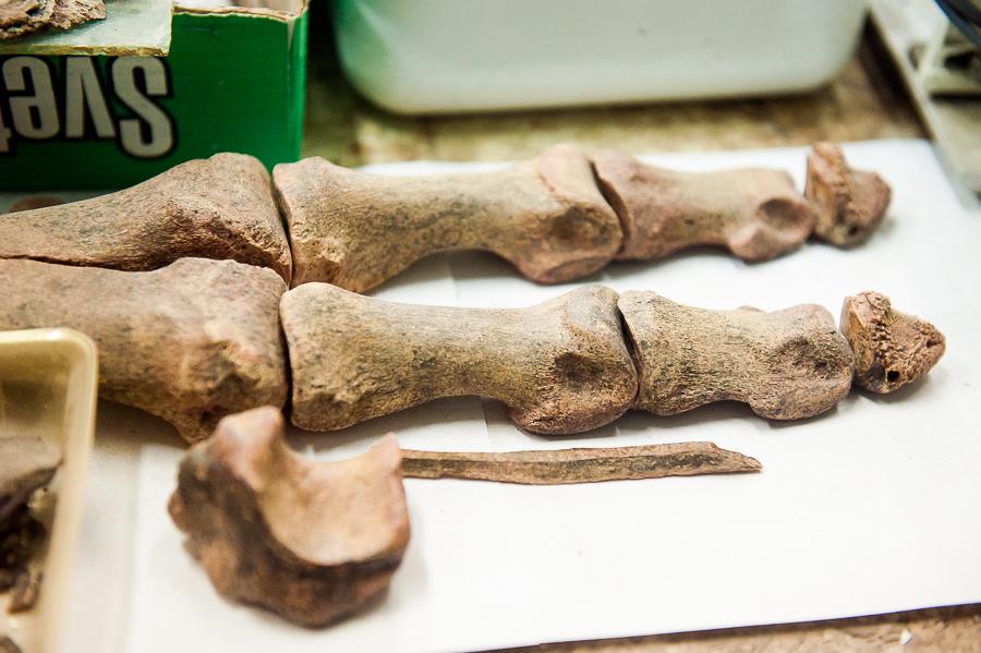 Астраханские археологи вынуждены остановить раскопки