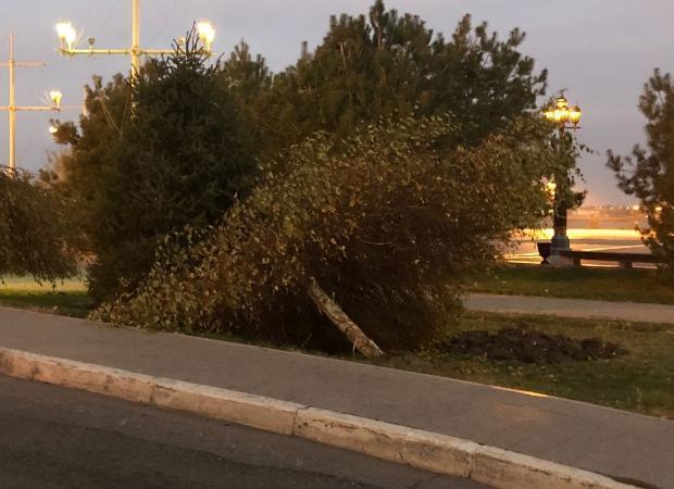 В Астрахани автомобиль снес дерево у памятника Петру I
