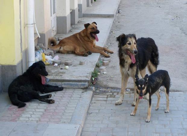 Проект питомника для бездомных животных в Астрахани потерялся